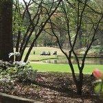 Golfcourse Lake Carts Pretty