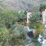 Flowering at Jamwal Villa