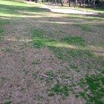 Wheres the grass