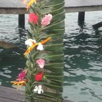 Coconut leaves with the native flowers