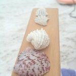 Tons of beautiful seashells