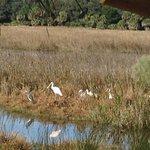 Birds on Little St Simon Island