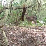 Deer in the deep forest