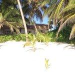 Cabanas from Beach