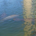 a few of the manatees