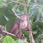Egg-thief Monkey