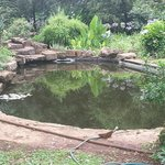 Lovely pool in garden
