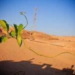 Растение в пустыне