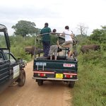 a cluster of jeeps pause for the elephants while engines run