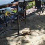 Animals at Breakfast