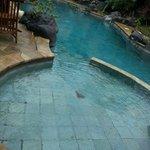 Pool near restaurant