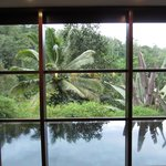 view of the personal infinity pool and the jungle beyond from the bed