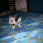 Marley the 3 week old kitten as of Jan 10th- please help her if you find her there, she needs yo