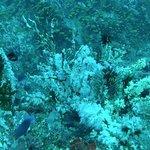 The Snow Corals