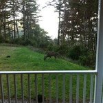 Photo de The Compass Rose Bed and Breakfast
