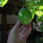 Frutas frescas para o cafe