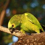 Parrot near watersports