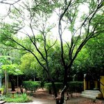Greenery that expresses an earthly feel to the place.
