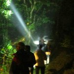 Guided night tour in cloud forest (reserve guide at reception)