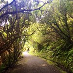 Stirling Point Walking Trails