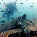 Turtle at 30M WOW AMAZING