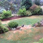 Wild life feeding area for wallabies, bandicoots and possums at dusk aka the  backyard overlooki