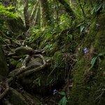 hogsback forest