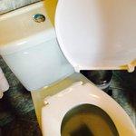 Toilet seat :)