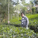 tea garden in resort