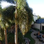 Palm trees right outside our balcony