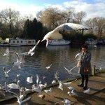 Feeding the birds 5 minute walk from hotel