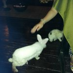 Rabbits asking for food :)