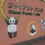 Entrata nella zona dei panda