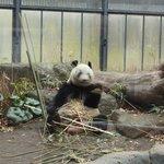Panda!!!!!!!!!!!!!!!!!!!!!