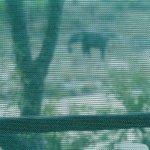 Elefante pasando enfrente al tented, visto desde dentro
