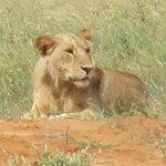 emozioni del safari