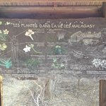 Information board on plants in Malagasy life