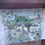 Information board on local birds