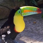 The amazing colors of the toucan in the aviary