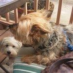 Doggie friendly brunch spot. Love it :).