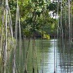 mangrow avenue