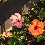 Beautiful Flowers Around the Resort
