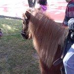 el pony pedrin