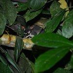 Opossum Nachtwanderung