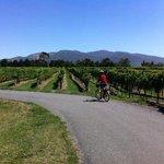 Wine Tours By Bike Fun...