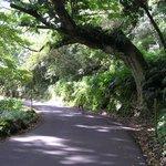 cycling north of Hana