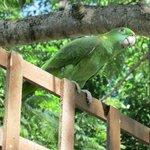 Friendly Resident Parrot