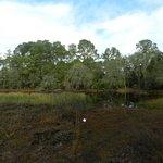 Jacksonville Arboreteum