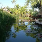 The focal point of the hotel is this wonderful reed and lotus pond