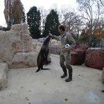 Seal & sea lion show